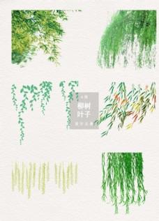 清新柳树叶子柳枝元素