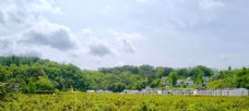 新农村茶园