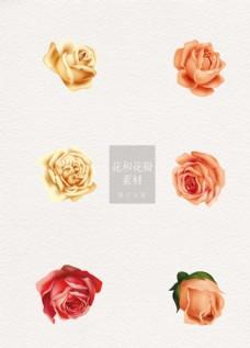 花和花瓣黄色粉色花朵玫瑰ai矢