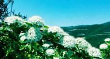 洁白的花朵