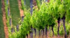 绿色风景图片 自然风光