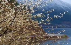 4月泸沽湖风景