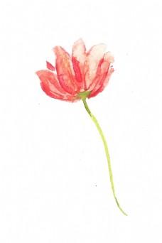 装饰画 花 单只花 唯美 颜色
