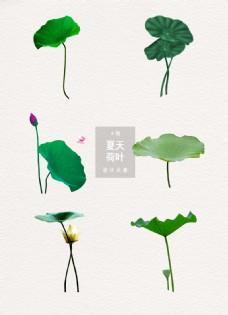 夏天荷叶植物元素设计